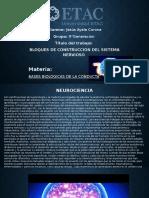 Sesión 2Trabajo individual 1Neurociencias.pptx