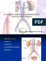 Anatomi sistem perkemihan.ppt