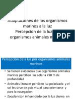 Adaptaciones de Los Organismos Marinos a La Luz Percepcion de La Luz Por Organismos Animales Marinos
