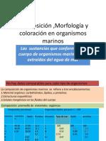 Composicion ,Morfologia y Coloracion en Organismos Marinos2016