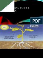Nutricion en las plantas.pptx
