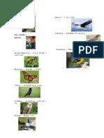 Aves en Qeqchi Ingles Español 10
