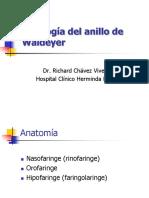 Patologia anillo de Waldayer.ppt