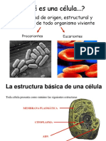 Teoría Celular. Tipos Celulares y Estructuras Citoplasmáticas.
