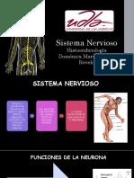sistema nervioso.pptx