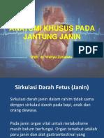 Anatomi Jantung Janin
