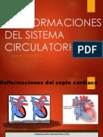 Malformaciones Del Sistema Circulatorio