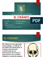 Craneo (Animado)