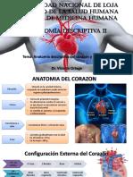 Anatomía de corazón y pericardio (Rouviere)