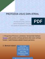 Kel 2 Protozoa Usus Dan Protozoa Atrial