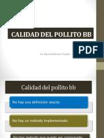 Calidad Del Pollito Bb