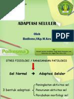 02_Adatasi Sel.pptx