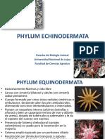 Tp Equinodermos