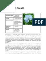 Details of Ornamental Plants