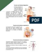 Función de Sistema Digestivo