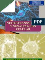 Neurotransmisión y señalización Celular