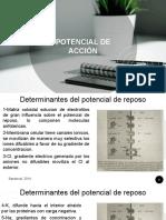 POTENCIAL DE ACCIÓN.pdf