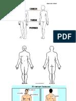 Anatomia y Fisiologia Humana I