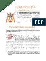 urinario.docx