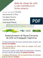 Produtividade de Clones Congresso de Serra Negra 2014