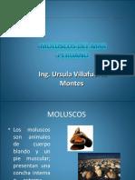 moluscosdelmarperuano-150125232429-conversion-gate02.pdf