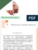 Hitologia Sistema Nervioso