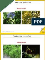 08_PLANTAS_COM_SEM_FLOR=LE