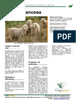 Angora-espagnole(1).pdf