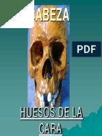 Copia de Copia de 23 Huesos Faciales (1)(1)