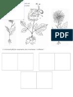 197902856 Crizantema Si Tufanica Fisa de Evaluare