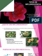 Tipos de Inflorescencia Oficial (1)