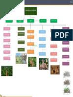 Clasificacion de La Ecologia