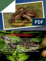 Serpiente Botrops