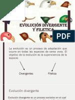 Evolución Divergente y Filetica