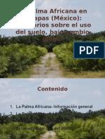 palma_en_chiapas.pdf
