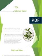 The Tea-An International Plant