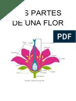 Partes de Una Flor Masculina, Femenina y Hermafrodita