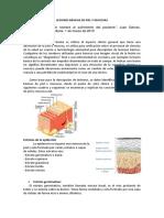 Lesiones Básicas de Piel y Mucosas
