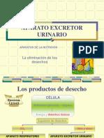 APARATO_EXCRETOR_URINARIO (1)(2)