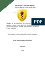 """""""Efectos de Las Fracciones Del Extracto Metanólico De"""