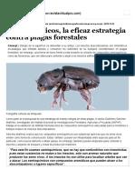 Semioquímicos, La Eficaz Estrategia Contra Plagas Forestales
