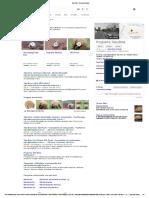 Tatu Bola - Pesquisa Google4