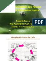 Manejo Integrado Del Picudo Del Chile Anthonomus Eugenii