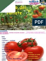 Taller Tomate