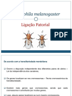 Drosophila Melanogaster (1)