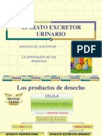 APARATO_EXCRETOR_URINARIO