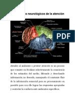 Centros Nerviosos Del Cerebro