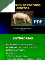 007 Genetica Porc