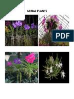 Aerial Plants