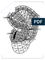 Mapa Zonas Auriculares 1